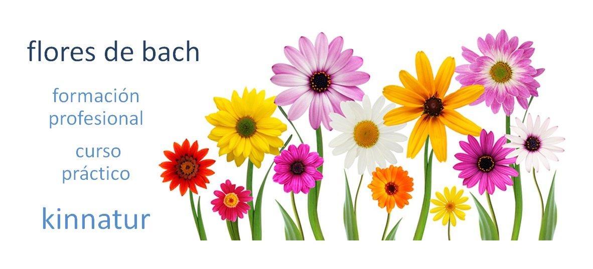 curso de flores de bach kinnatur