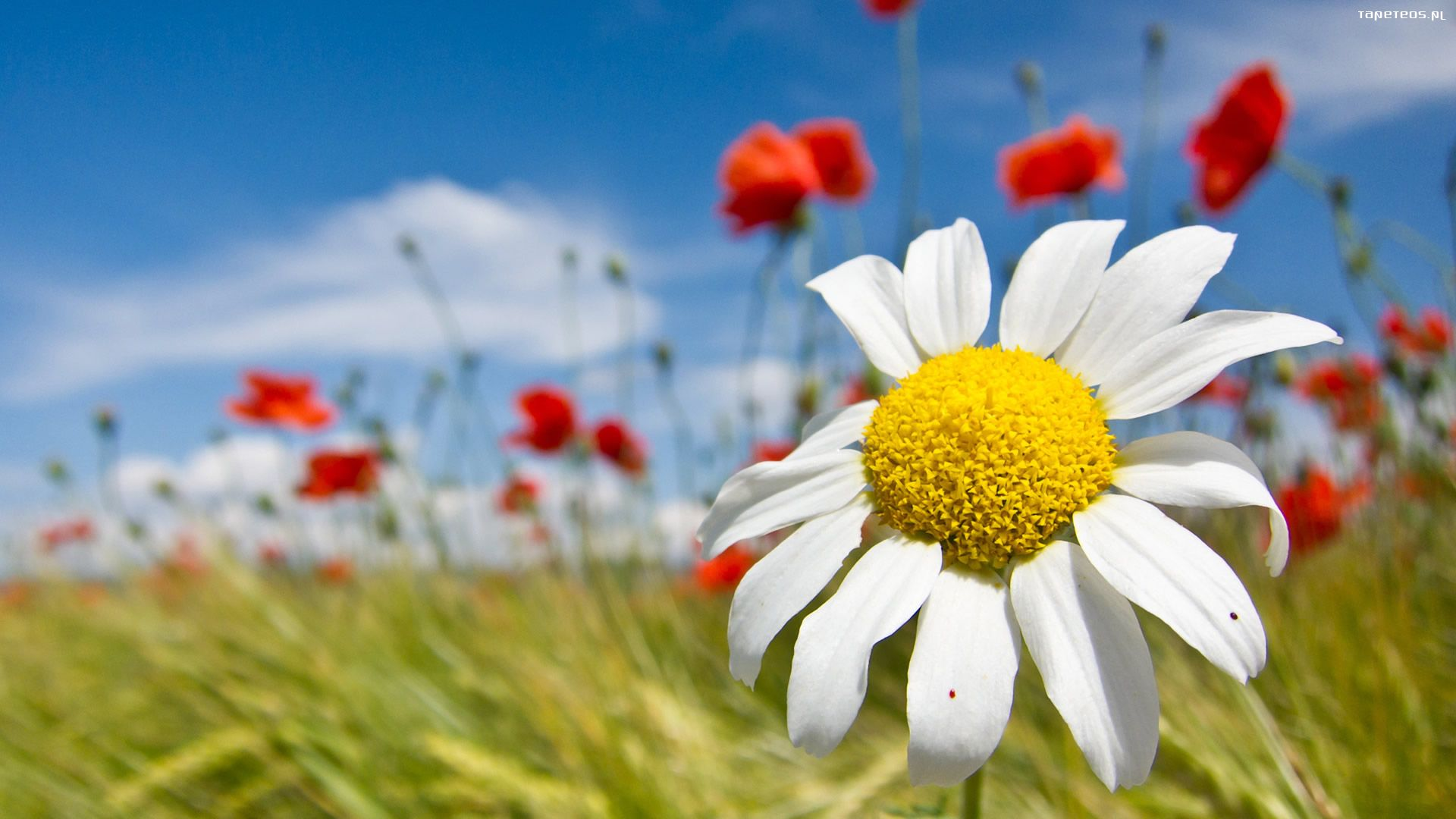 wiosna_1920x1080_003_kwiaty