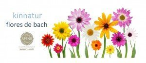 kinnatur-flores-de-bach